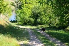 wandelen hond vergroot (1280x853)